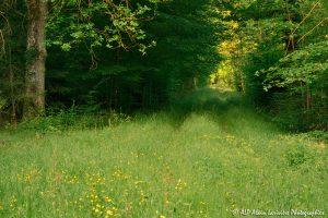 Chemin boisé -1EM-