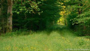 Chemin boisé -1EMR-
