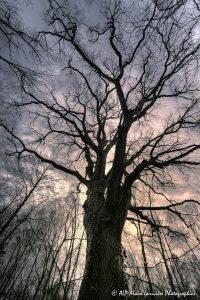 Silhouettes d'arbres -4- (Rendu ton chaud)