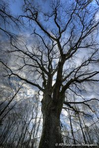 Silhouettes d'arbres -3- (Rendu normal)