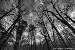 Silhouettes d'arbres -7- (Rendu N&B)
