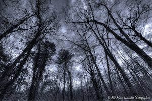 Silhouettes d'arbres -5- (Rendu ton bleu)