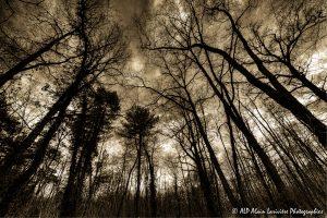 Silhouettes d'arbres -6- (Rendu ton brun)