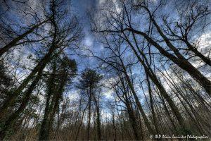 Silhouettes d'arbres -9- (Rendu normal)
