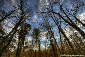 Silhouettes d'arbres -8- (Rendu normal modifié)