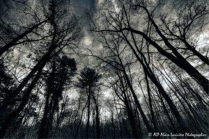 Silhouettes d'arbres -10- (Rendu nuit tombante n° 1)