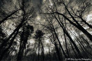 Silhouettes d'arbres -11- (Rendu nuit tombante n° 2)