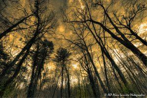Silhouettes d'arbres -12- (Rendu ton orange)