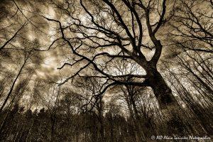 Silhouettes d'arbres -14- (Rendu ton brun)