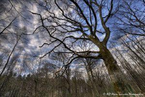Silhouettes d'arbres -16- (Rendu normal)