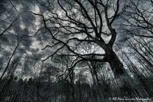 Silhouettes d'arbres -17- (Rendu nuit tombante n° 1)