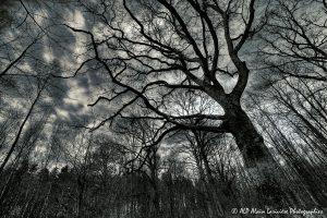 Silhouettes d'arbres -18- (Rendu nuit tombante n° 2)