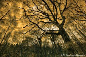Silhouettes d'arbres -19- (Rendu ton orange)