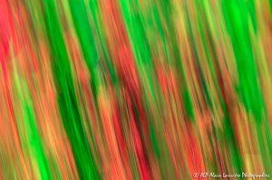Filés végétaux : Abstract -1-