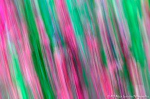 Filés végétaux : Abstract -1M-