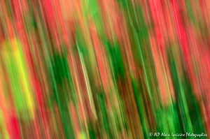 Filés végétaux : Abstract -2-