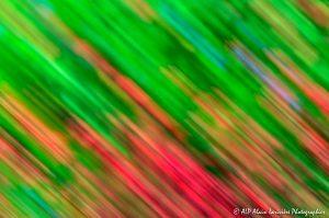 Filés végétaux : Abstract -3-