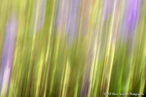 Filés végétaux : Abstract -8-