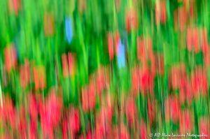 Filés végétaux : Abstract -9-