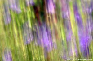 Filés végétaux : Abstract -10-