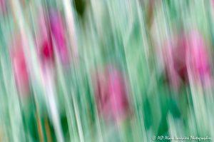 Filés végétaux : Abstract -11M-