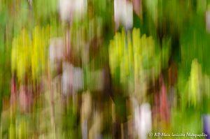Filés végétaux : Abstract -12-