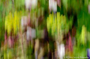 Filés végétaux : Abstract -12M-