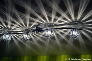 Faisceaux de lumière -3-