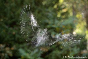 Impact d'oiseau sur une vitre -1-